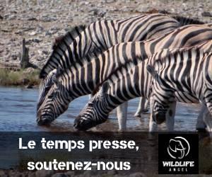 Wildlife 350X250
